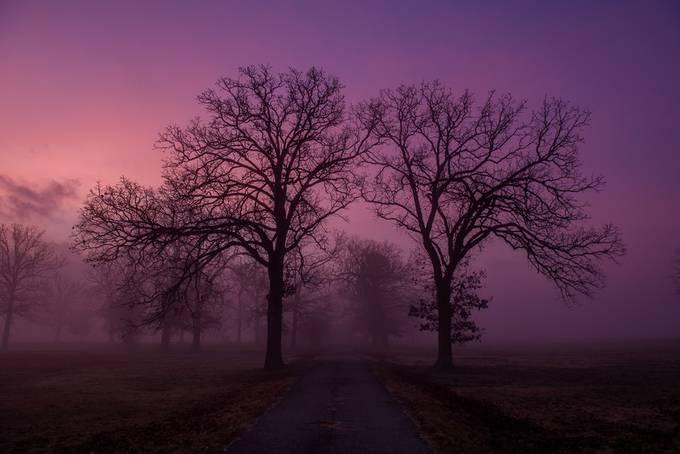 Purple Morning by sjholbert - Shades Of Purple Project