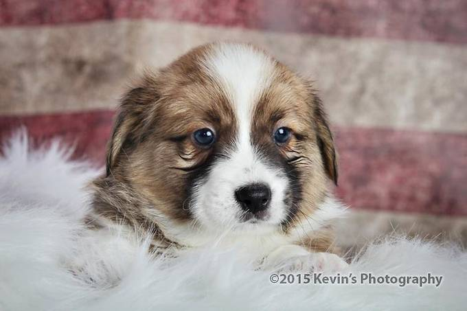IMG_0420-copy by kdooley - Kittens vs Puppies Photo Contest