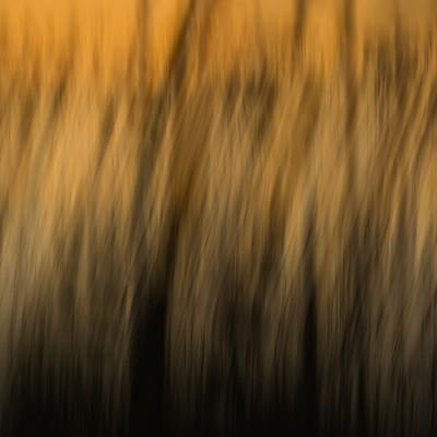 sagegrassandsunsett