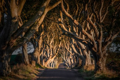 Walking the Dark Hedges