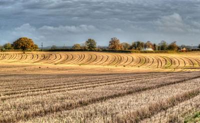 Northamptonshire Field