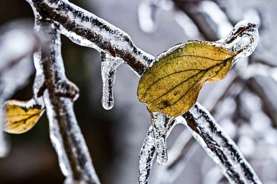 A severe ice storm hit the GTA and the seasons took pause.