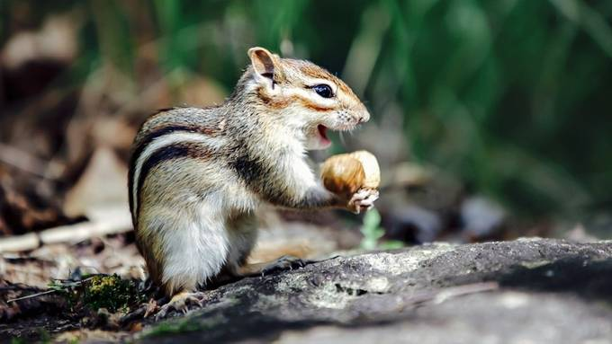 Woohoo! Got a peanut! by CarolineHuard - Happy Moments Photo Contest