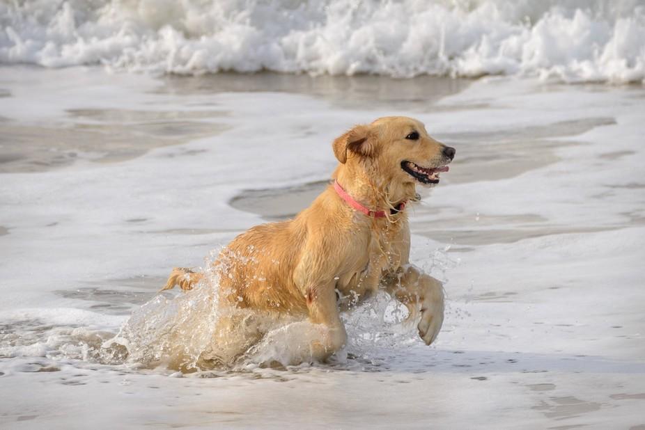 Cão Feliz - Happy Dog