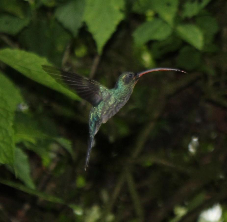 Lucky hummingbird moment in Costa Rica