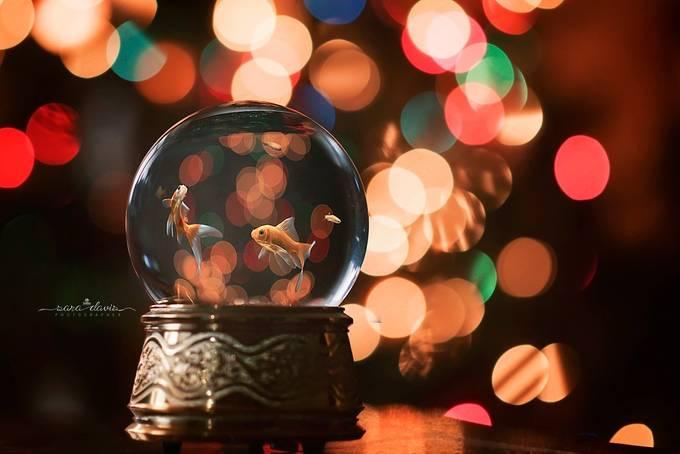 Los Peces del Navidad by Arastan - Holiday Lights Photo Contest 2017
