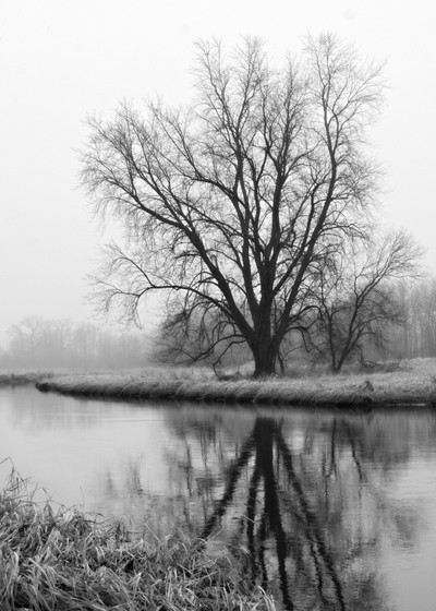Tree Reflection In The Fox River On A Foggy Day