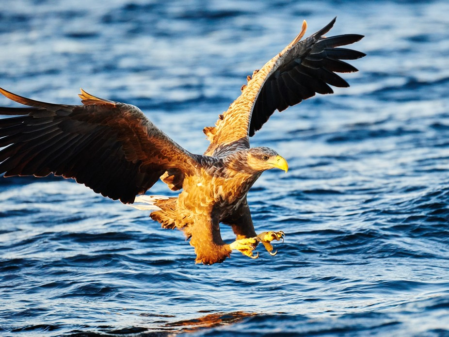 I do a lot of eagle safaris with our guests and some times it just all comes together.