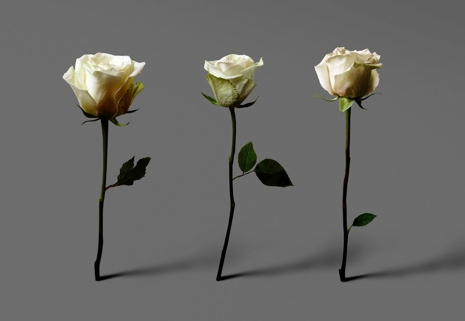 josh_caudwell_advertising_photographer_london_commercial_art_photography_flowers_roses_8