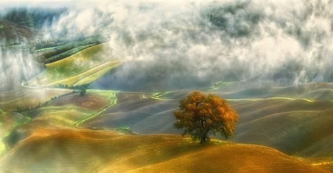 Oak... by kbrowko - Depth In Nature Photo Contest