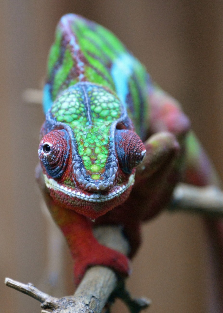 Are you looking at me by Jfer1992 - Reptiles Photo Contest