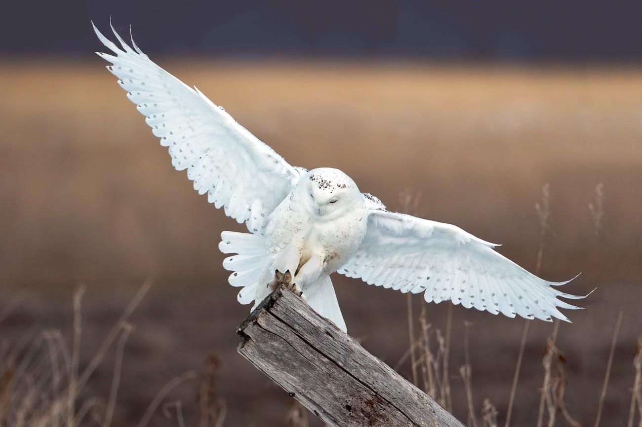 Beautiful Owls Photo Contest Winners