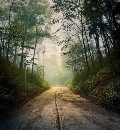 Forsaken Road