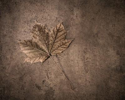 One Leaf December 1st