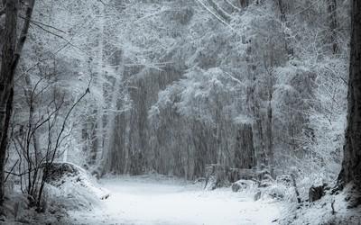 First Snow - B&W