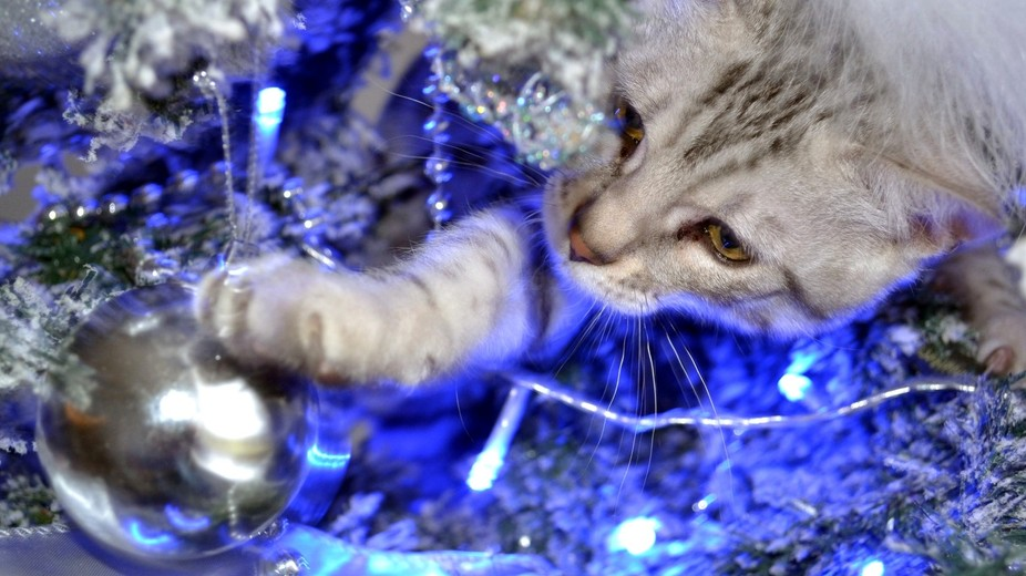 My Cat destroying the Christmas tree. This is what Christmas is really about.