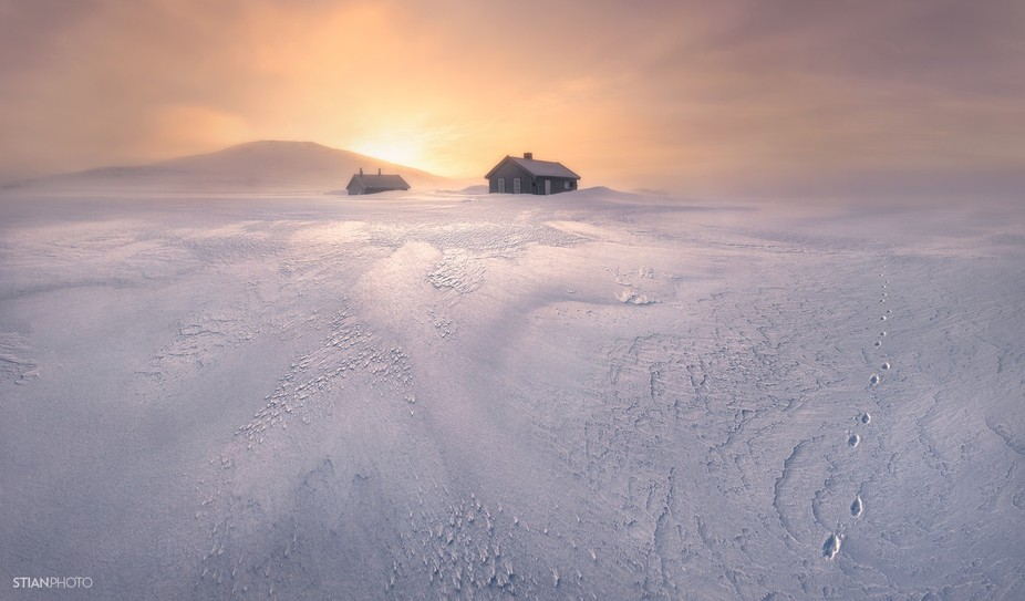A rare sight in this remote wilderness of snow and ice in Norway. One morning a lone Arctic Fox p...