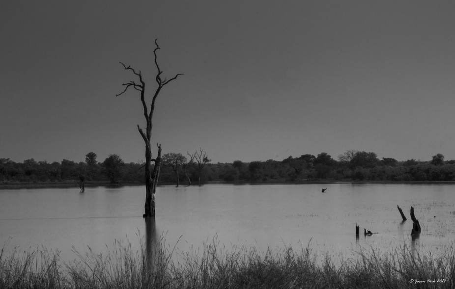 Found a herd of more than forty elephant swimming in this lake.