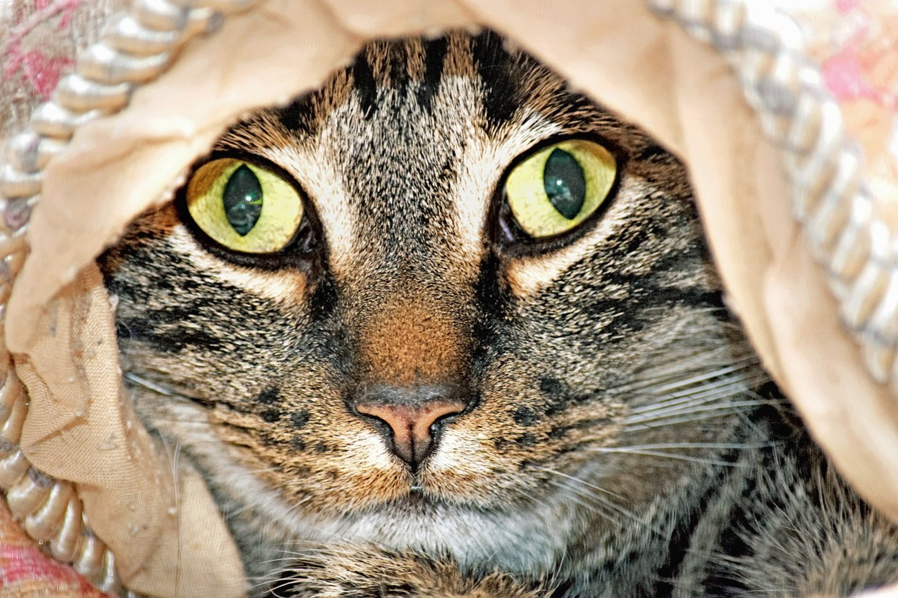 Hercules Under the Blanket