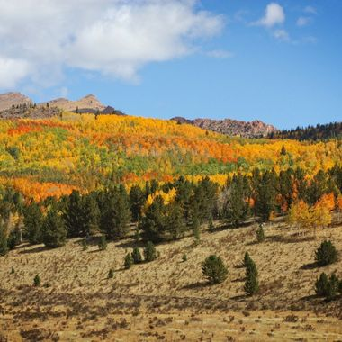 Aspen autumn colors on the west side of Pikes Peak, near Cripple Creek, Colorado.