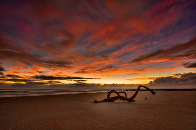 Driftwood at Sunrise by DanMac - Rule Of Thirds In Nature Photo Contest