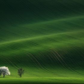 South Moravian, Czech Republic. May of 2015. The first flowering trees.