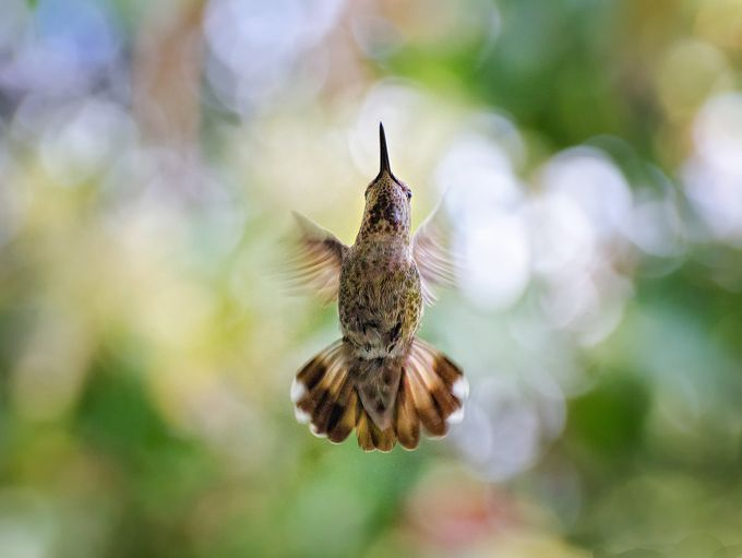 Humming Above My Head by derekgalon - Hummingbirds Photo Contest