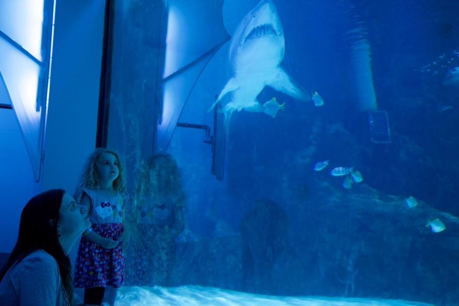 Woman and girl gaze into the shark tank