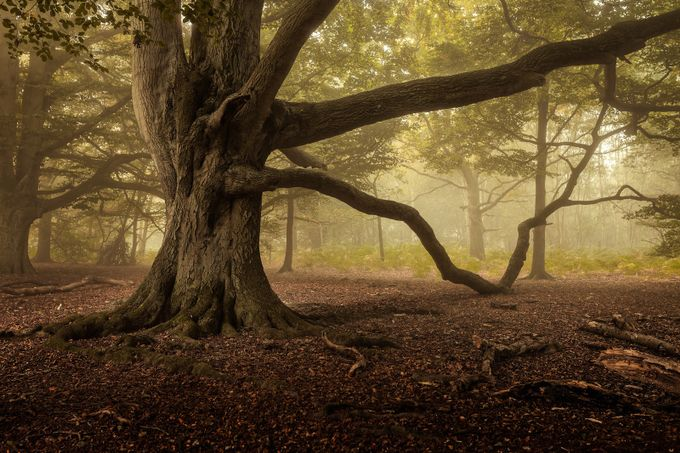 Limbs by Jellyfire - Divine Forests Photo Contest