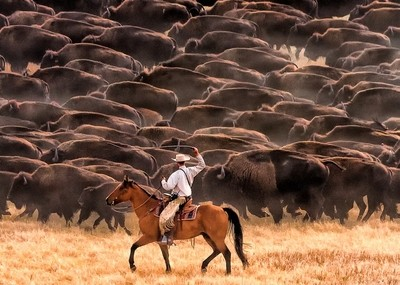 Thundering Hooves on the South Dakota Prairie