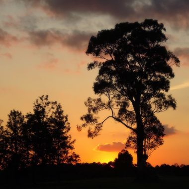 Sunset Collection (43) - Silverdale