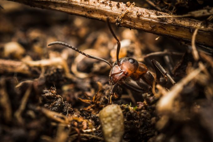 Ant by FeroD - Below My Knees Photo Contest