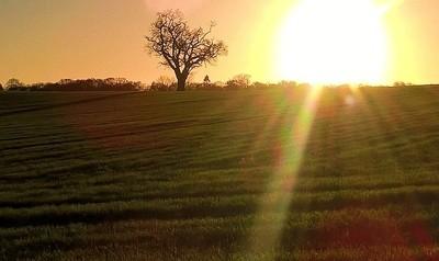 Bealings  Oak 21-12-15