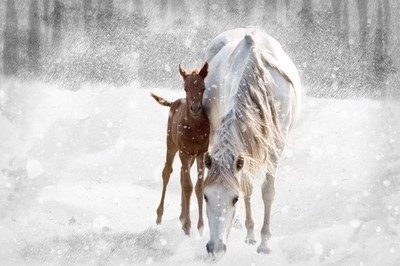 ~Baby Staying Close to Mom to Stay Warm~