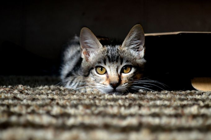 patience by FiveDPhotography - Cute Kittens Photo Contest