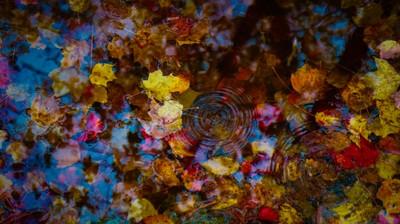Autumn teardrop copy