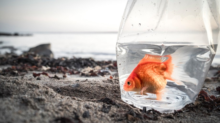 We are all goldfish. In tanks. Stacked on top of each other, Dreaming of the sea we know nothing ...