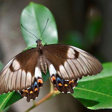 Pretty Flying Things -  Moth (2)