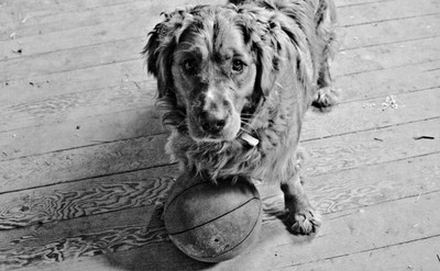 Can we play basketball