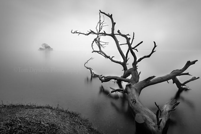 Branching Out by TomDrysdale - Black And White Wow Factor Photo Contest