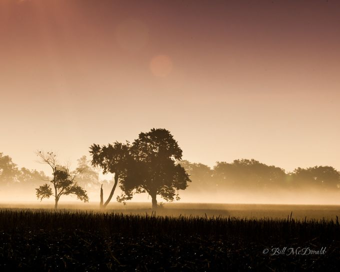 Sepia Sunrise by Grenfell - Silhouettes Of Trees Photo Contest