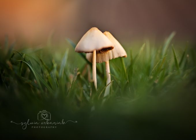 Fungi by SylwiaUrbaniak - Above Or Below Photo Contest