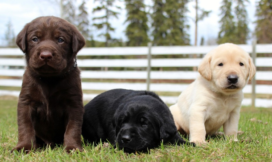 3 cute baby puppies enjoying their first time outside