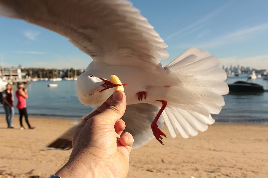 A hungry seagull snatched a potato chip from my hand as I sat on the seafront at Watson'...