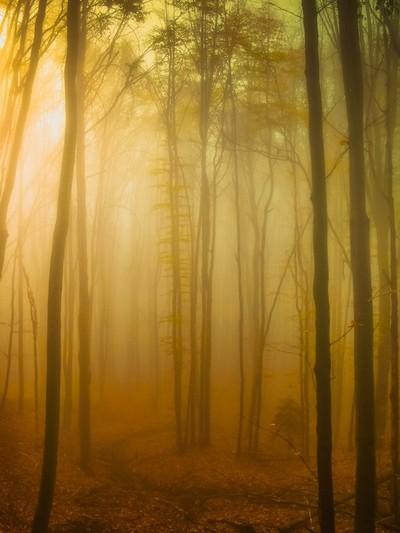 Lighting fog in forest
