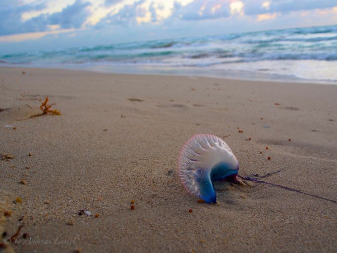 The Lonely Jellyfish by andreaslassel - Below My Knees Photo Contest