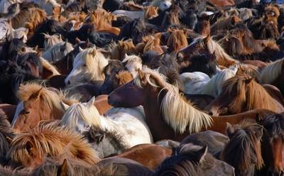 Horse Round-Up