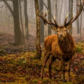 Red deer: It is the European cousin of the wapiti in a smaller size, but its antlers can have more than 20 points. In the spring, the antlers of ...
