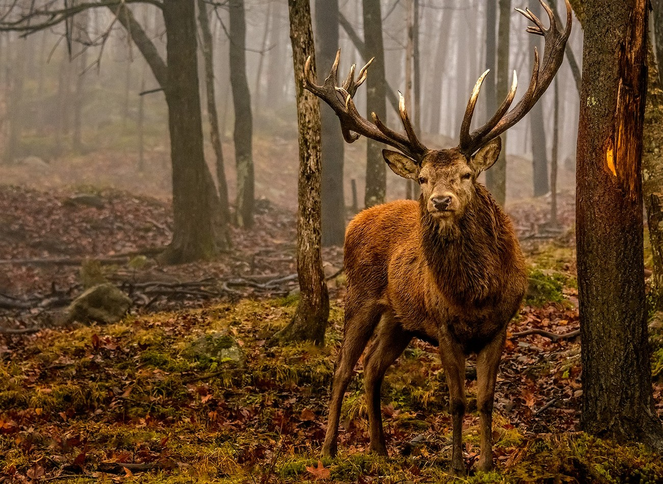 Wildlife Photography: Patience Is A Virtue