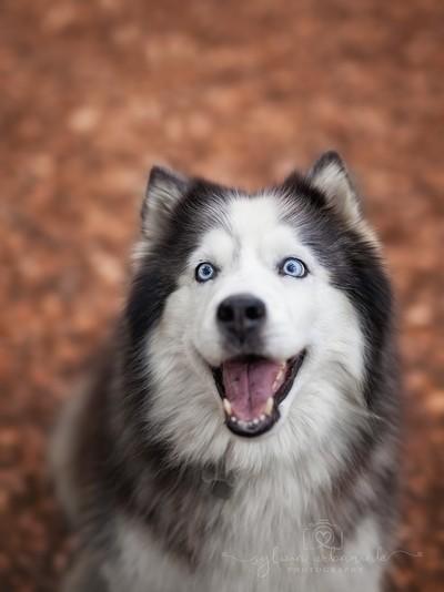 Hey, give me a treat!